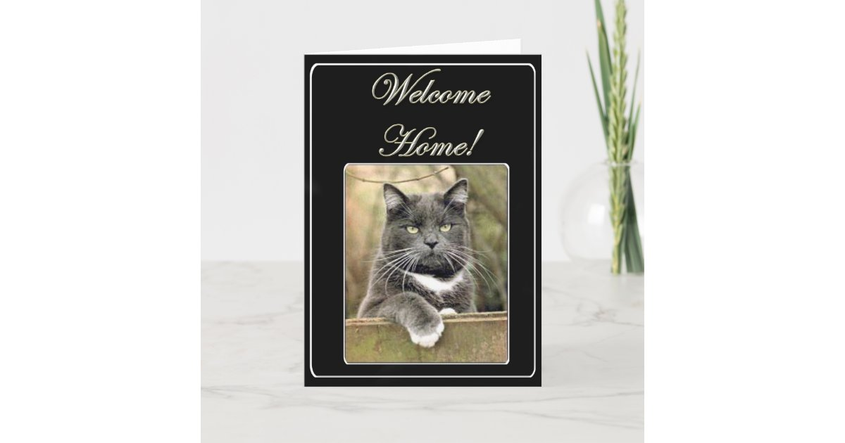 Welcome home cat greeting card zazzle m4hsunfo