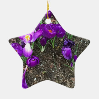 Welcome Spring Ceramic Star Decoration