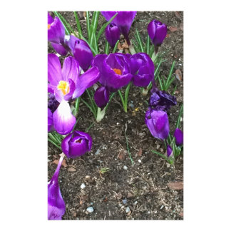 Welcome Spring Customized Stationery