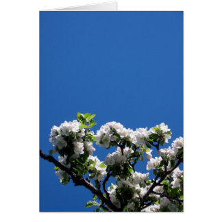 Welcome spring ! greeting card