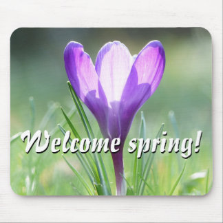 Welcome spring! Purple Crocus in spring 02.2.T Mouse Mat