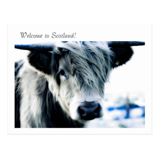 Welcome to Scotland! Postcard