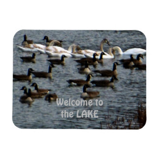 Welcome to the Lake Swans & Geese Rectangular Photo Magnet