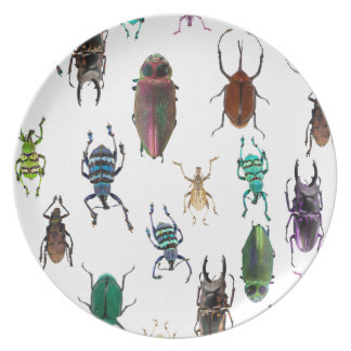 Wellcoda Beetle Type Habitat Insect Life Plate