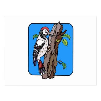 Wellington Woodpecker Postcard