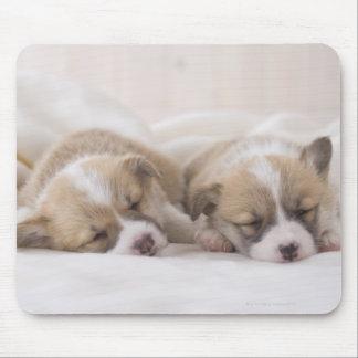 Welsh Corgi Puppies Mouse Mat