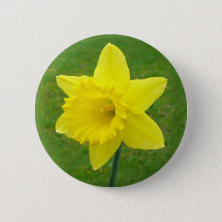 Welsh Daffodil 6 Cm Round Badge