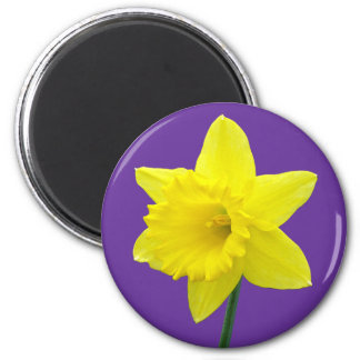 Welsh Daffodil - II Refrigerator Magnet