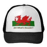 welsh dragon hats