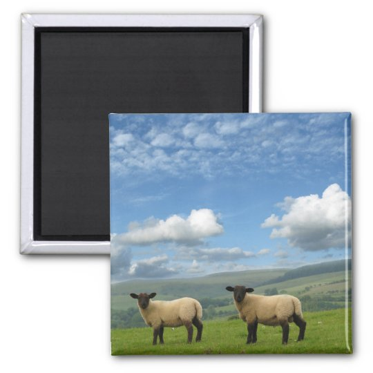 Welsh Lambs Magnet