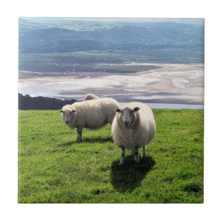 WELSH MOUNTAIN SHEEP TILE