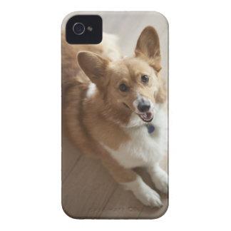 Welsh Pembroke corgi dog lying on wood floor. iPhone 4 Covers
