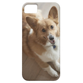 Welsh Pembroke corgi dog lying on wood floor. iPhone 5 Cover