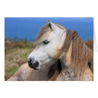 Welsh Pony Greeting Card