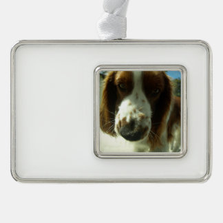 welsh springer spaniel close up.png silver plated framed ornament