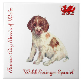 Welsh Springer Spaniel Collector's Tile