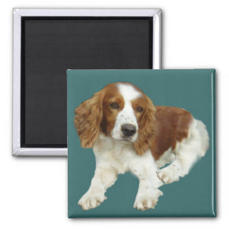 Welsh Springer Spaniel Portrait Gifts Square Magnet