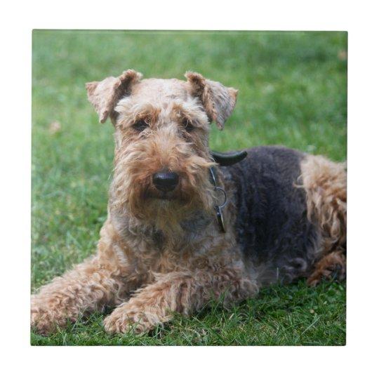 Welsh Terrier dog beautiful photo tile or trivet