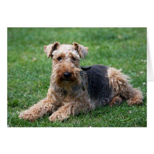 Welsh terrier dog blank note card, greetings card