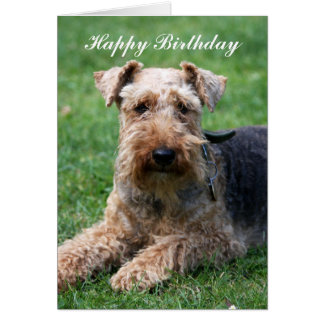 Welsh terrier dog happy birthday greeting card