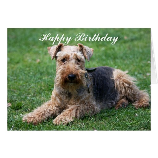 Welsh terrier dog photo birthday greeting card