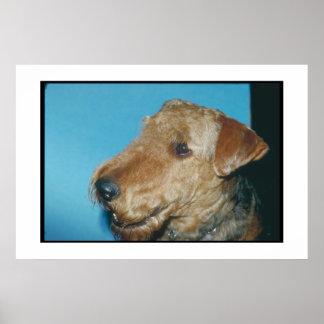 Welsh Terrier Poster