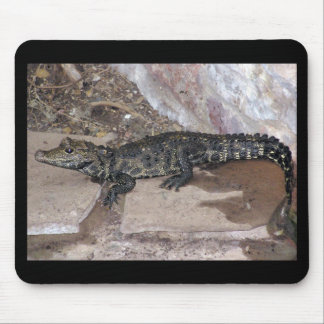 West African Dwarf Croc - Osteolaemus tetraspis Mouse Pad