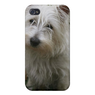 West Highland Terrier iPhone 4 Case