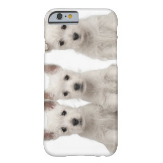 West Highland Terrier puppies (7 weeks old) Barely There iPhone 6 Case