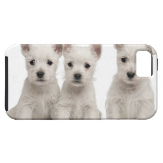 West Highland Terrier puppies (7 weeks old) Tough iPhone 5 Case