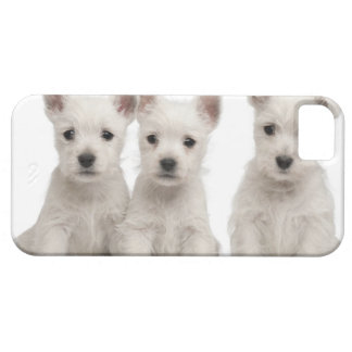 West Highland Terrier puppies (7 weeks old) iPhone 5 Covers