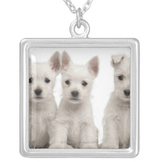 West Highland Terrier puppies (7 weeks old) Silver Plated Necklace