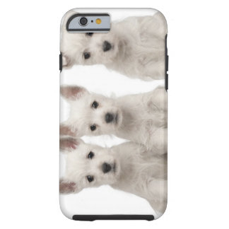 West Highland Terrier puppies (7 weeks old) Tough iPhone 6 Case