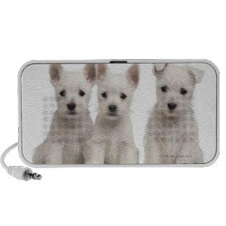 West Highland Terrier puppies (7 weeks old) Travelling Speakers