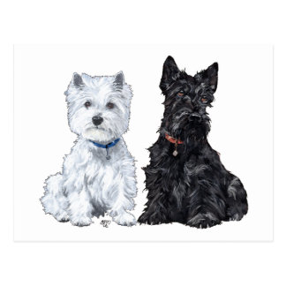 West Highland White & Scottish Terriers Postcard