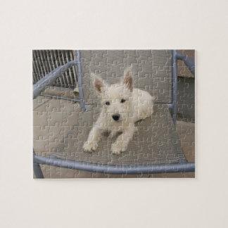 West Highland White Terrier Dog Puzzle