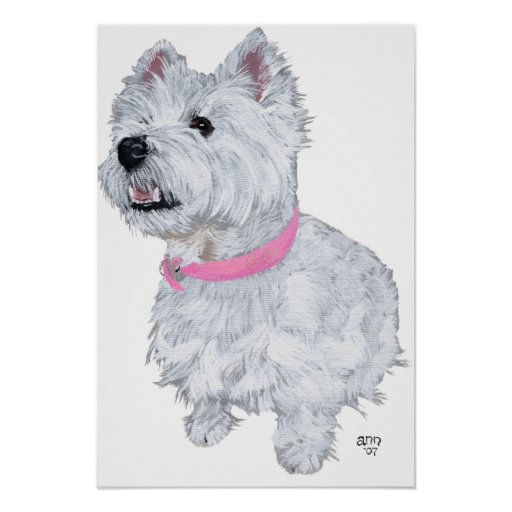West Highland White Terrier Looking Up Print