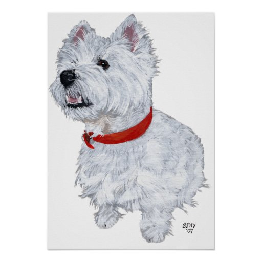 West Highland White Terrier - Looking Up Poster