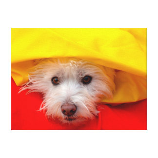 West Highland White Terrier peeking out of yellow Canvas Print