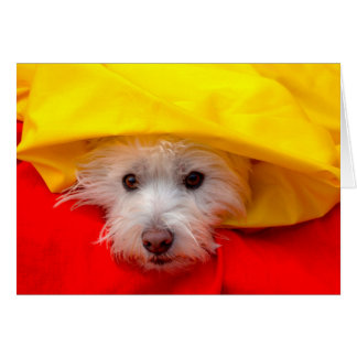 West Highland White Terrier peeking out of yellow Card