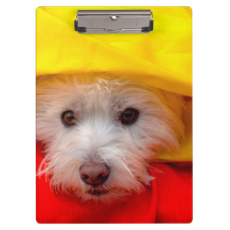West Highland White Terrier peeking out of yellow Clipboard