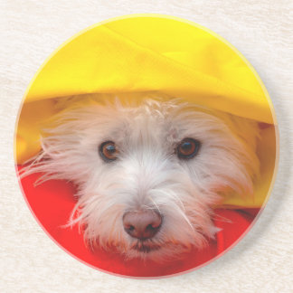 West Highland White Terrier peeking out of yellow Coaster