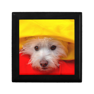 West Highland White Terrier peeking out of yellow Gift Box