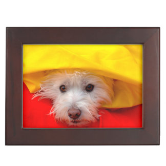 West Highland White Terrier peeking out of yellow Keepsake Box