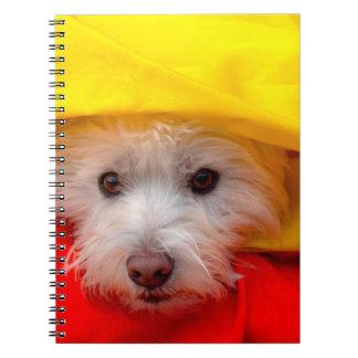 West Highland White Terrier peeking out of yellow Notebook