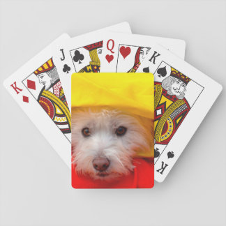 West Highland White Terrier peeking out of yellow Playing Cards