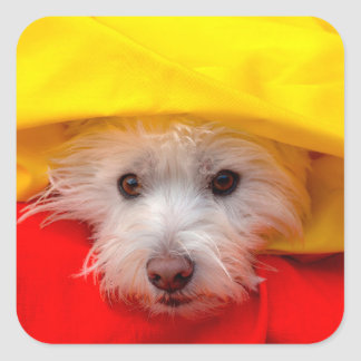 West Highland White Terrier peeking out of yellow Square Sticker