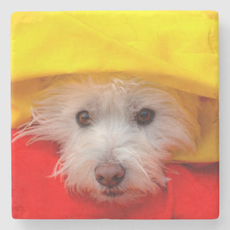 West Highland White Terrier peeking out of yellow Stone Coaster