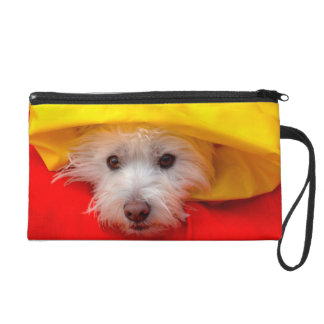 West Highland White Terrier peeking out of yellow Wristlet