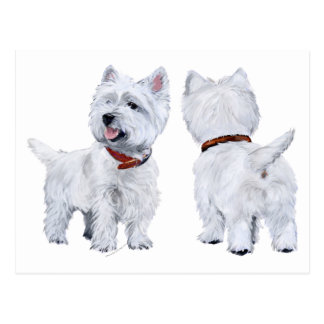 West Highland White Terrier Postcards